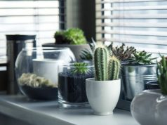 6 Easy Ways Decorate Your Home with a Houseplant