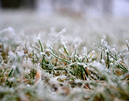 Easy Tips For Lawn Care In Winter
