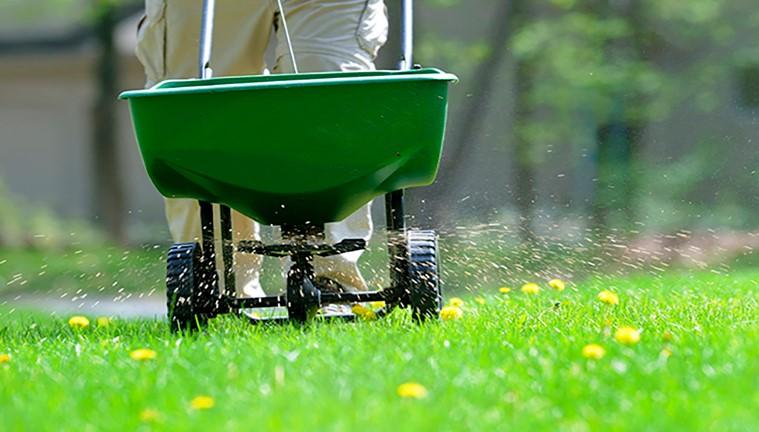 Fertilization lawn grass