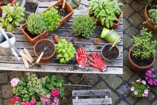Growing edible plants