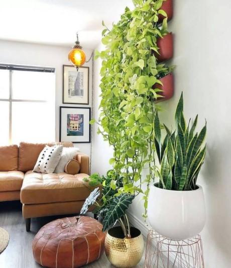 Houseplant and background decor