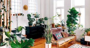 benefits houseplants