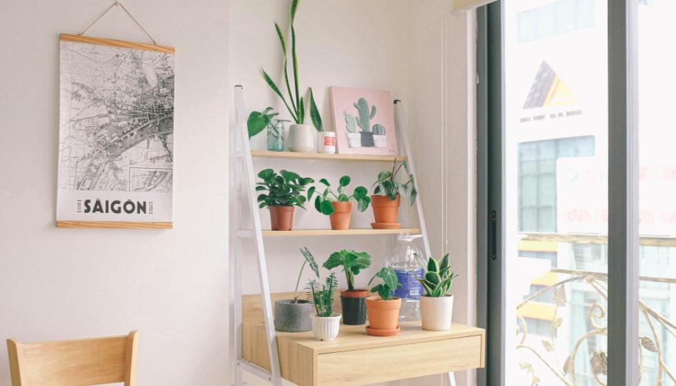 houseplant and window light