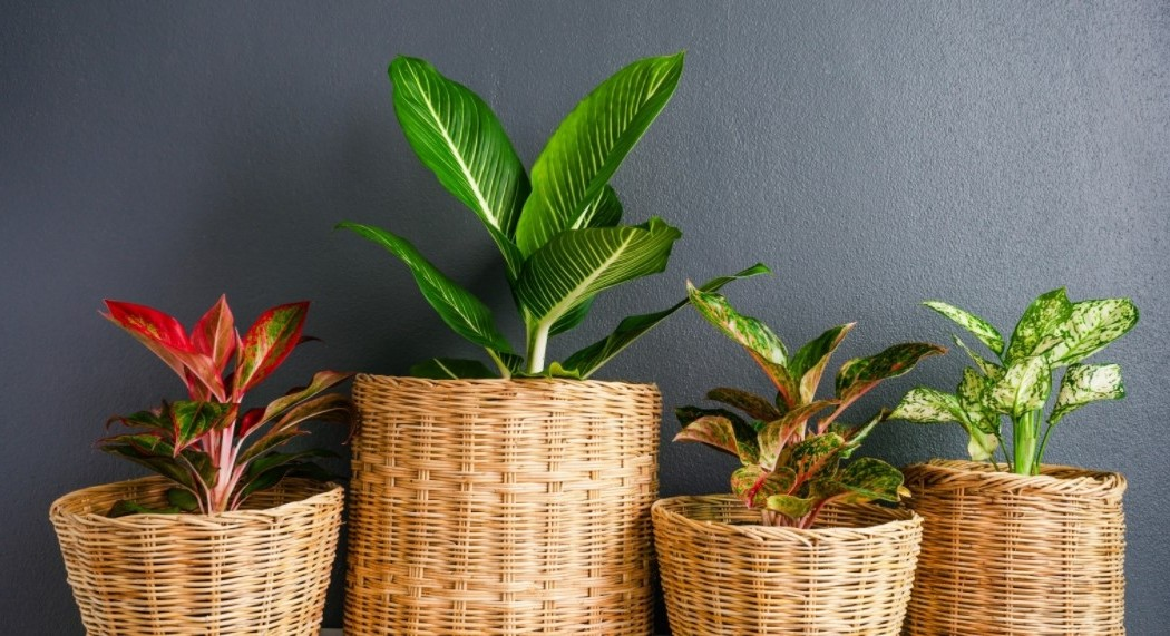 mix and match colorful houseplant