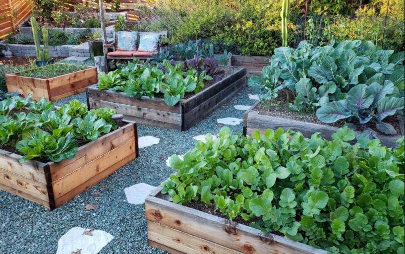 raised bed trend gardening
