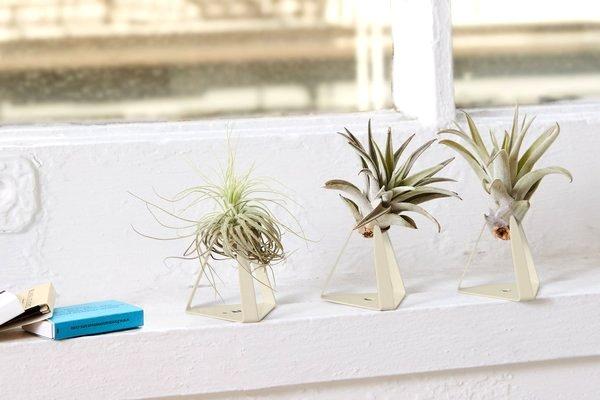 Air Plants bathroom plants