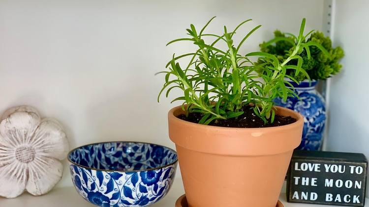 Easy Tips For Growing Tarragon Indoors