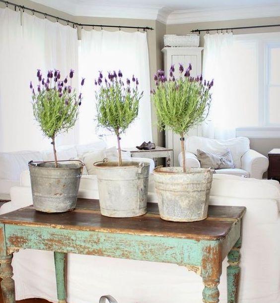 Easy Tips Growing Lavender Indoors