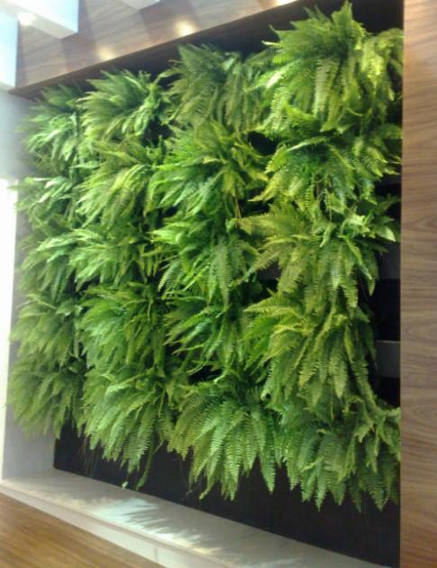 Fern Indoor wall garden