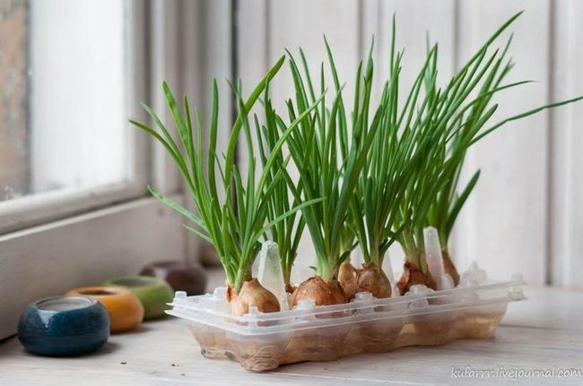 Green Onions in Pot