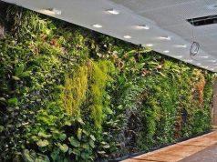 Indoor wall Vertical Garden