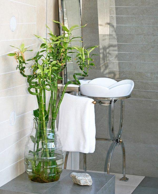 Lucky bamboo bathroom plants