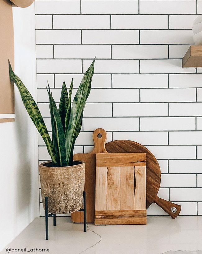 Snake Plant in kitchen