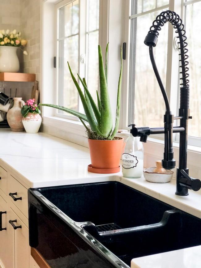 aloevera in kitchen
