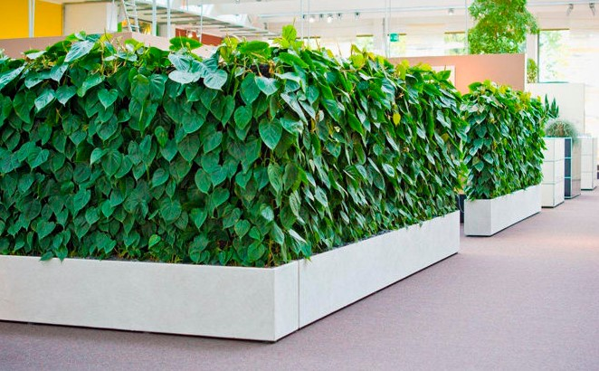heart leaf philodendron indoor wall garden
