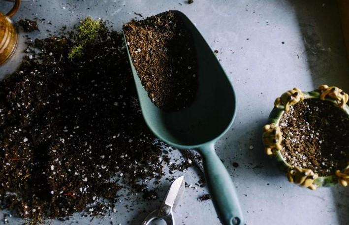 ideal soil lemon pot