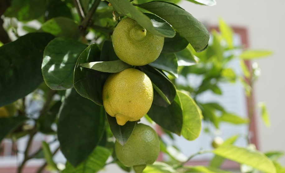 How to stimulate fruit growth