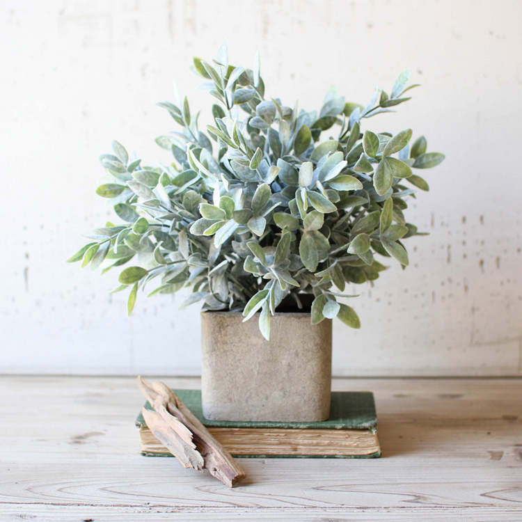 sage herbs winter indoor