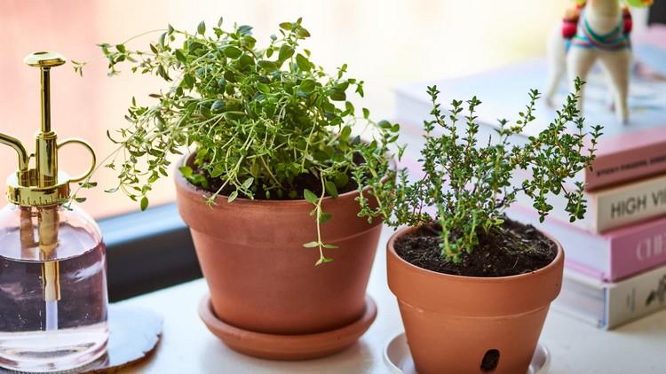 thyme herbs winter