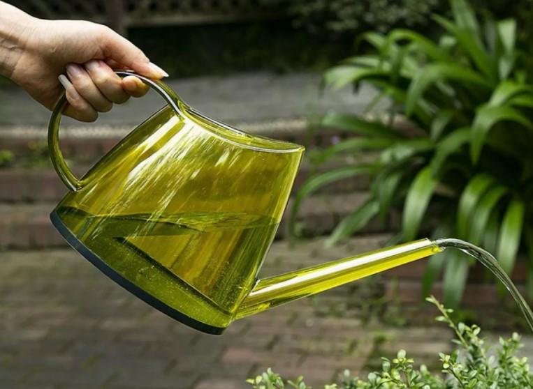 watering lemon pot